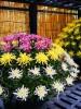 Парк СЭНГАНЪЭН (цветы)